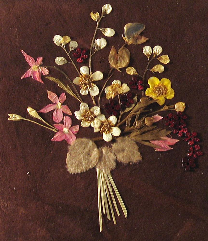 original Растения для гербария