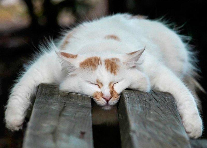 Морда спит... она устала... Наглость сильно измотала!