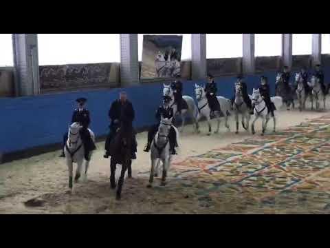 Путин скачет на коне — свидомит сидит в овне