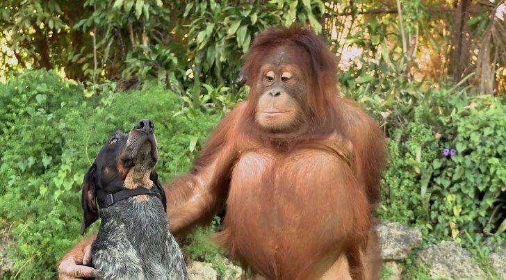 Животные, которые умеют друж…