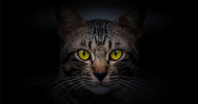 Кошки - природные эмпаты, способные исцелить ваш разум, тело и душу