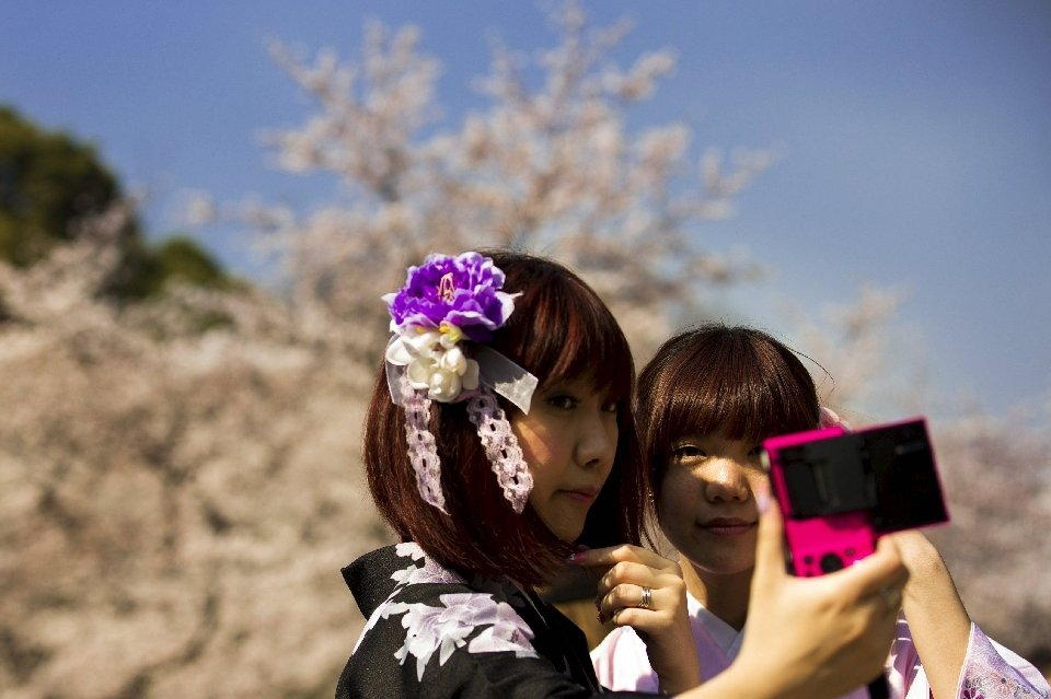 традиция любования цветущей сакурой-7