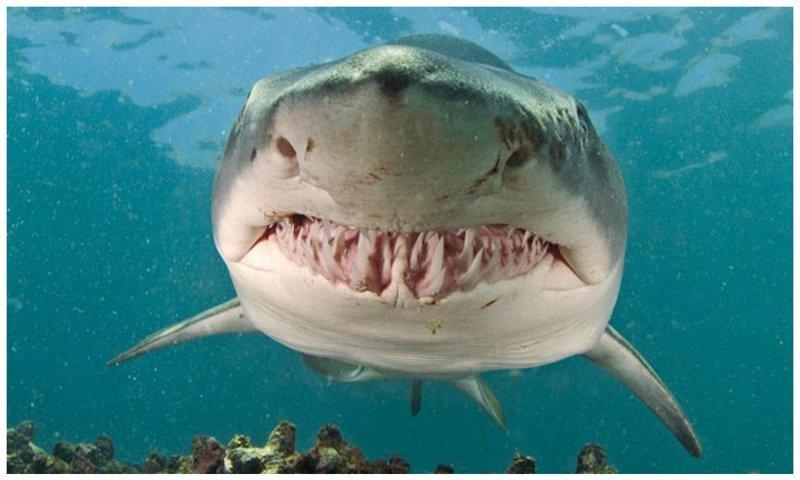 Улыбнитесь и хорошего вам дня! животные, звери, зубы, интересное, красота, оскал, природа