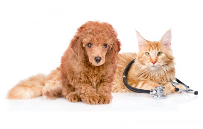 Выбрать хороший ветеринарный центр на Petstory