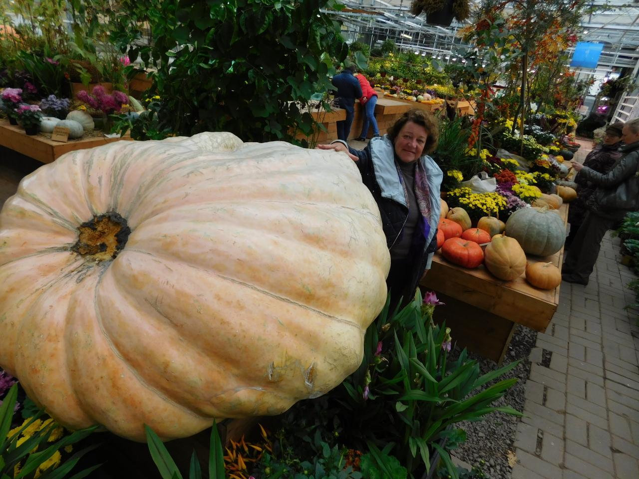 Самая большая тыква России - 645,5 кг!