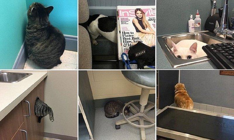 На что только не идут животные, чтобы спрятаться от ветеринара! (13 фото)