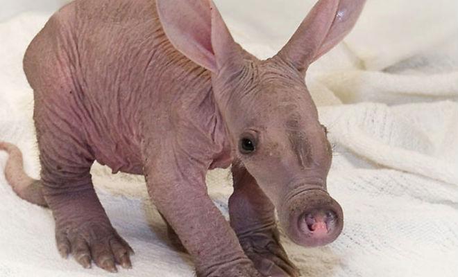 Популярные животные, которых в детстве никто не узнает