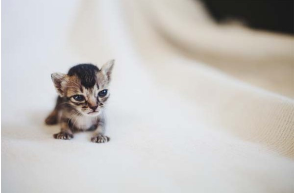 Брошеный крошечный котенок