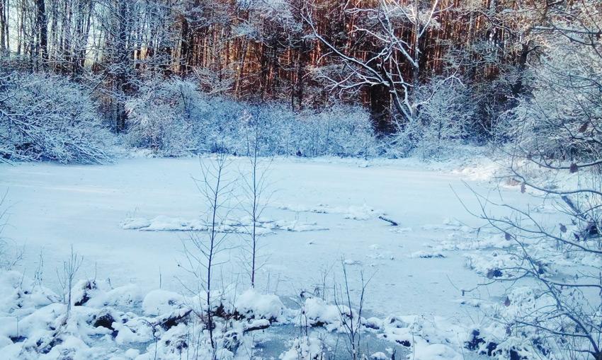 Милый сердцу лесной пруд