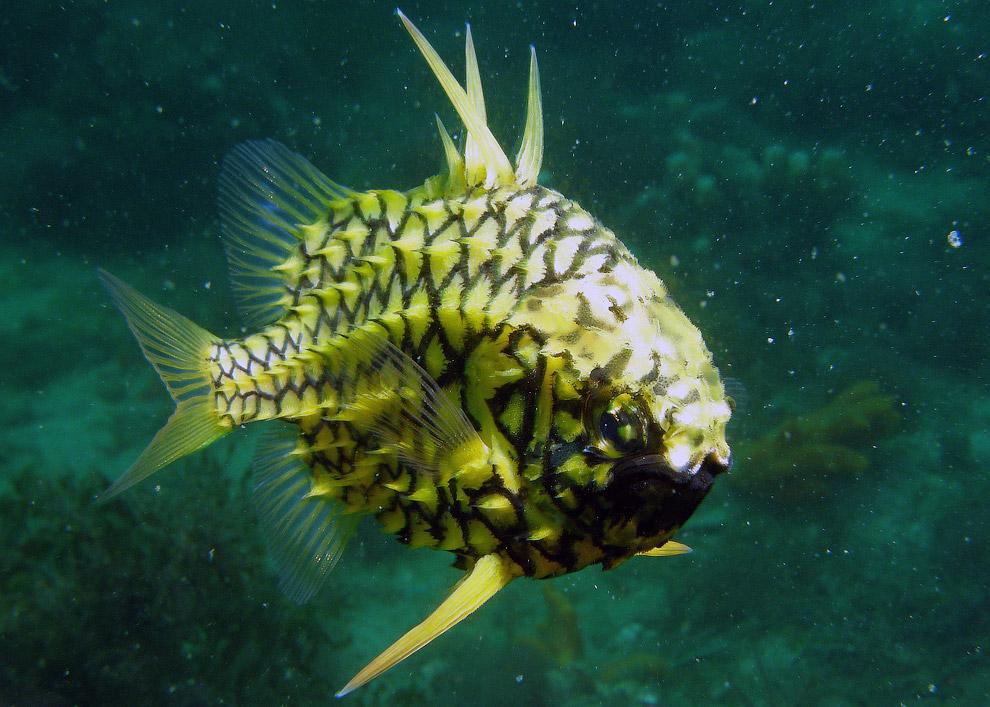 флаг, необычные рыбы морей и океанов фото теперь
