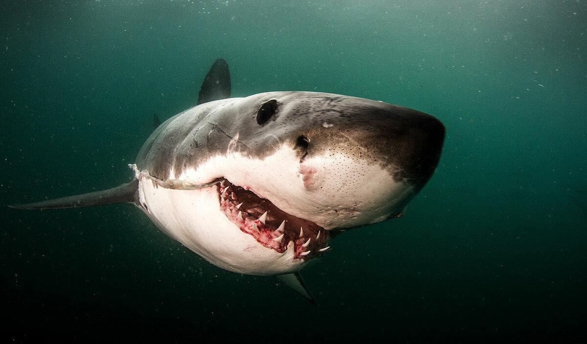 Где акулы нападают на людей чаще всего?