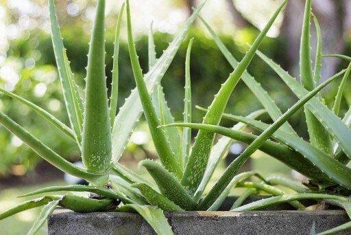 8 магических растений для Вашего дома