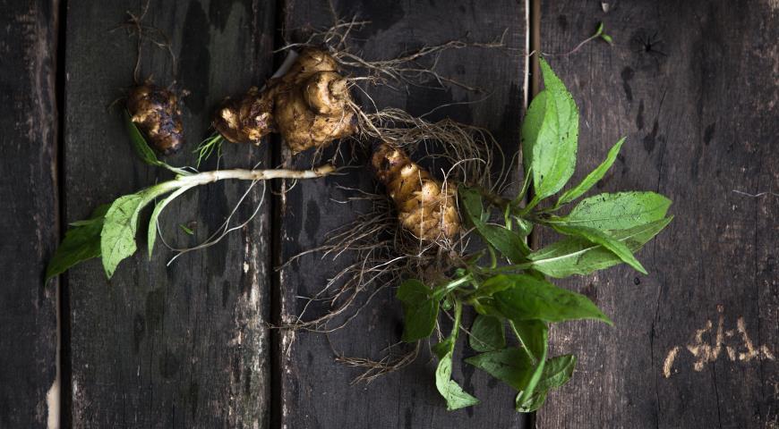 Топинамбур: когда копать, как хранить и чем он полезен + рецепты готовим дома,огород,рецепты,урожай