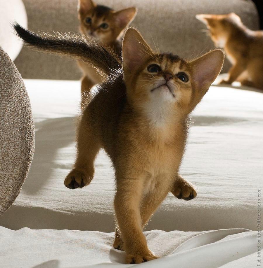 Картинки котов кошек и котят смешные