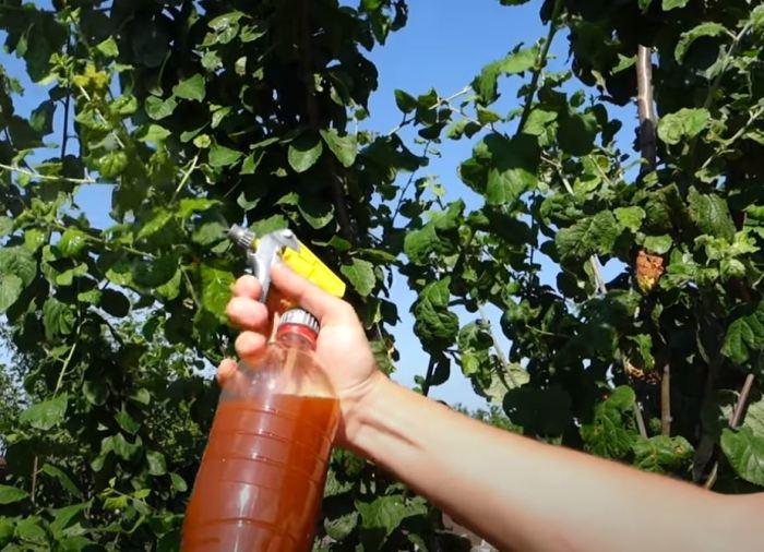 «Народное» средство, которое сможет извести тлю на участке без использования химии вредители,дача,полезные советы,сад и огород