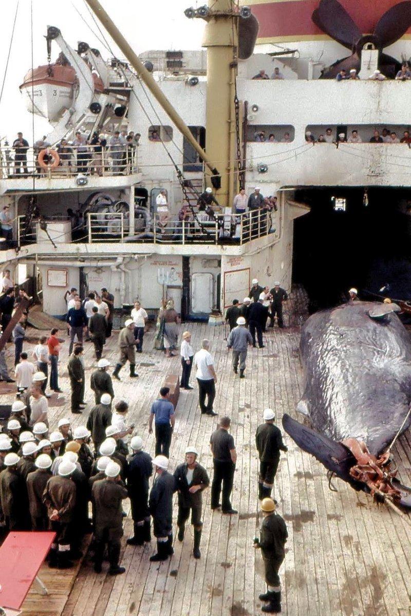 Советские китобои