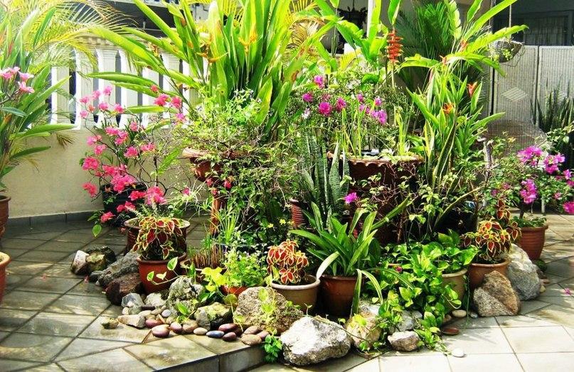 Тайна ворованных растений.