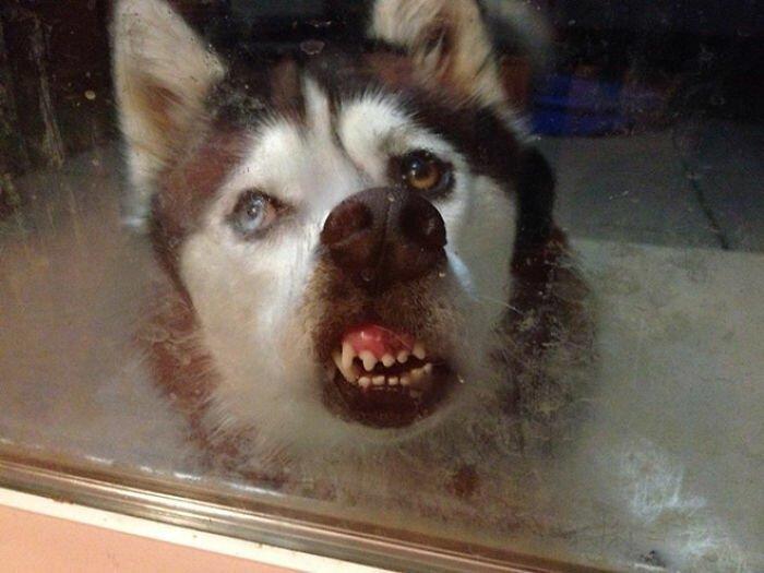 Собаки-зубаки: эти смешные зубастики поднимут вам настроение!