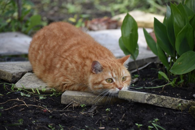 5. Только 28% кошек съедают свою добычу после охоты. Остальные делают это ради развлечения или по другим, не зависящим от чувства голода причинам. кот, кошка, факты