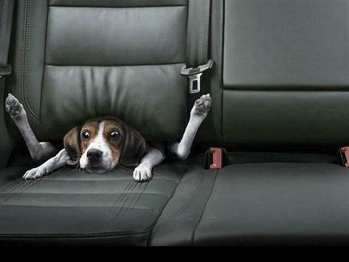 Смешные картинки собака в машине