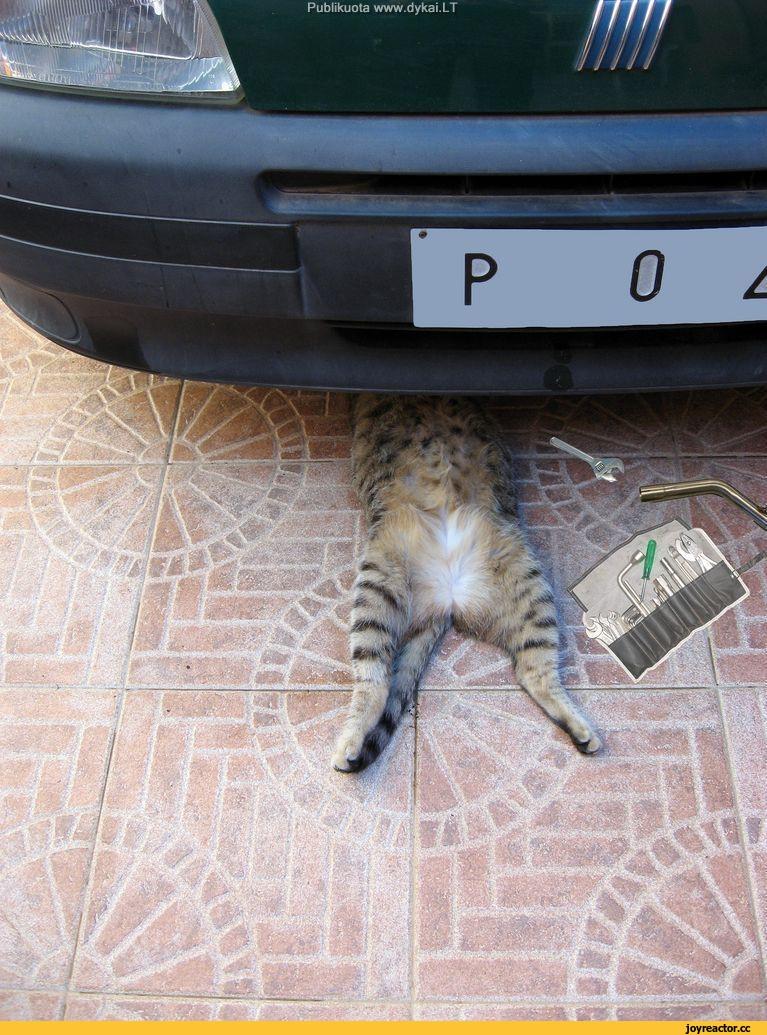 Эх...а хорошо, что я кота завел