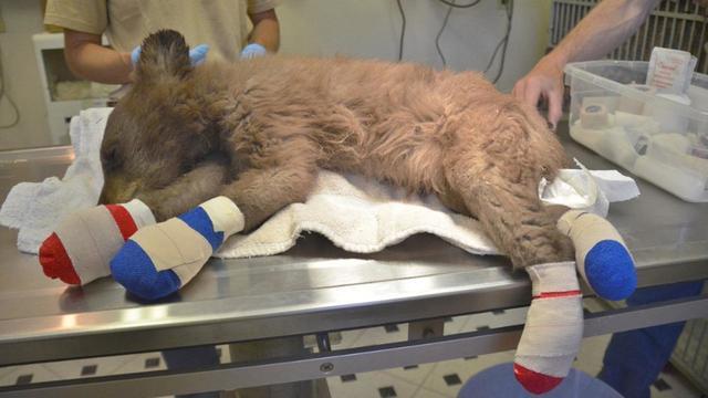 Вокруг бушевал пожар, а он сидел на бревне… Медвежонок остался без мамы, но помощь была рядом!