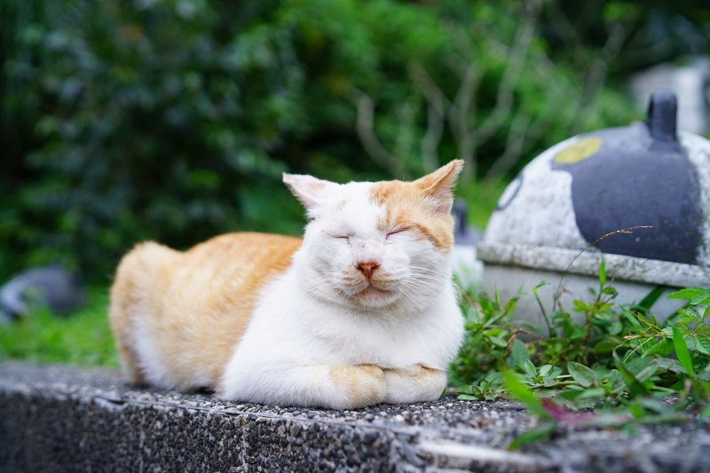 Самые кошачьи города мира: Новый Тайбэй, Тайвань Тайбэй, Тайвань, кошачий туризм, кошки, туризм, хоутун, эстетика