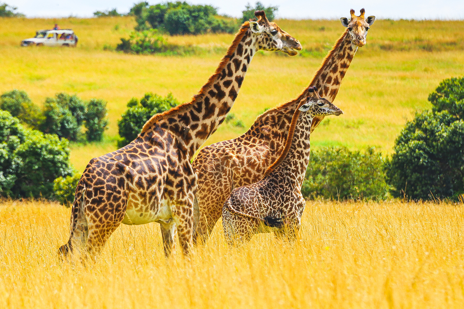 Следующая остановка --Африка гид,заграница,поездка,самостоятельные путешествия,страны,туризм
