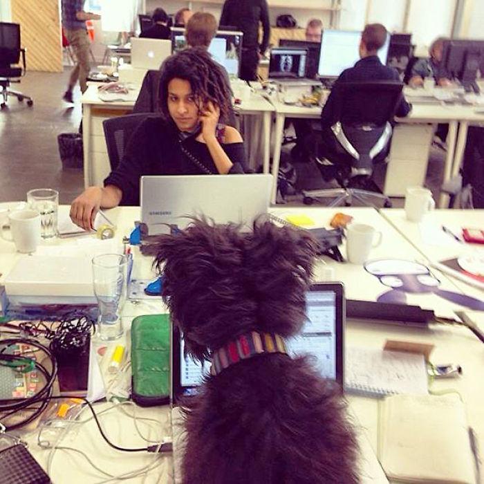 Собака и ее хозяйка на работе.