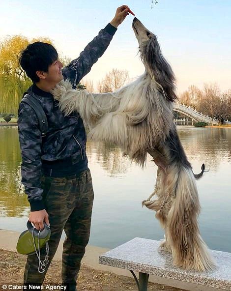 Китаец тратит тысячи долларов на средства по уходу за шерстью