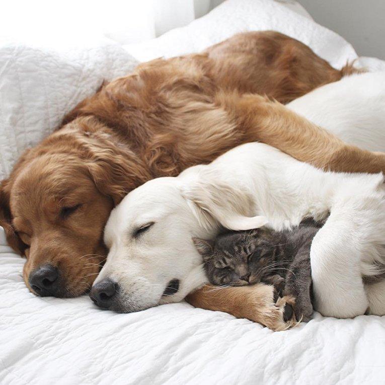 Картинка с животными спокойной ночи