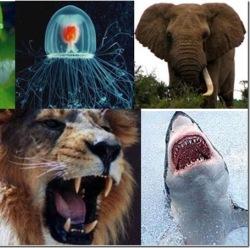 Самые сильные укусы в животном мире