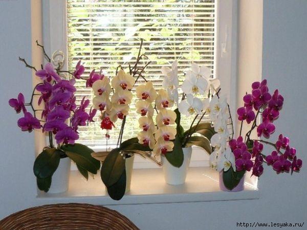 Волшебный ингредиент, который поможет сделать цветение орхидей пышным и продолжительным!