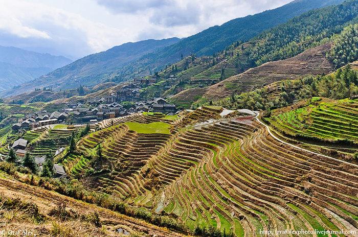 Мир вокруг. Рисовые террасы в Китае