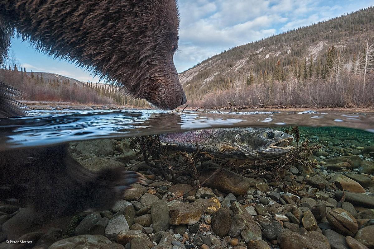 Лучшие фотографии дикой природы — 2014