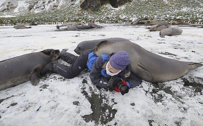 Любопытный тюлень во время фотосессии забрался на женщину-фотографа в мире, видео, животные, милота, природа, тюлень, фото