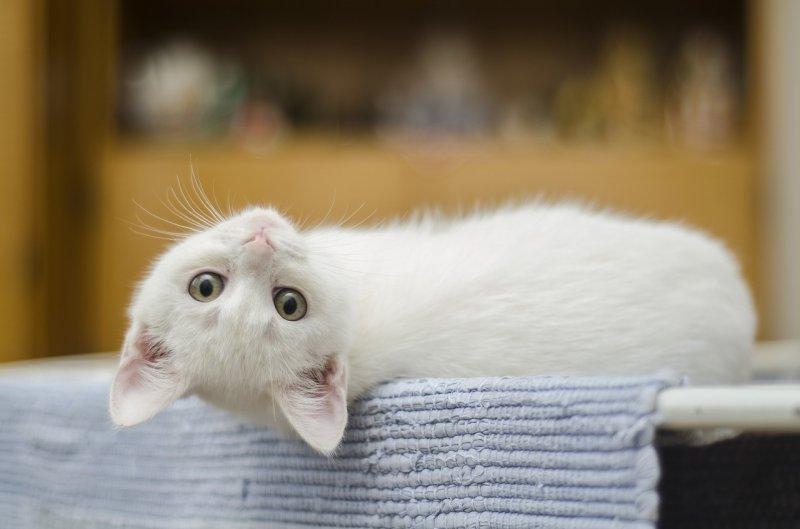 2. Они прекрасно распознают хозяйский голос и свое имя, но обычно предпочитают игнорировать эти ненужные мелочи :) кот, кошка, факты