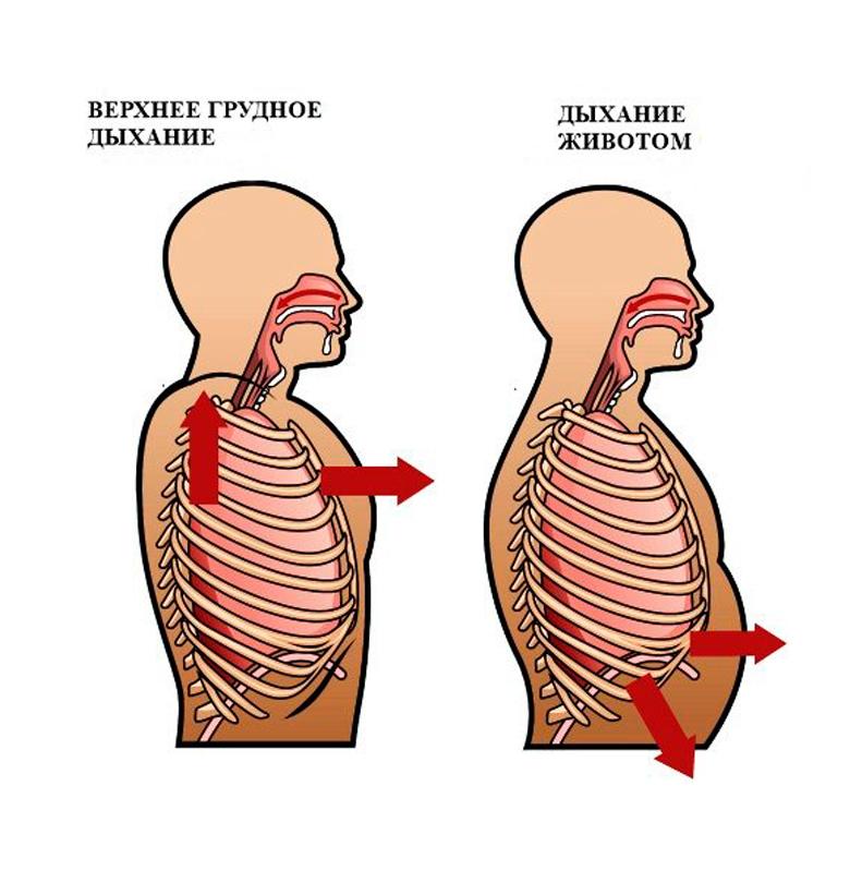 Прямое нижнее дыхание: источник энергии, красоты и здоровья дыхание, диафрагму, живота, дышать, органы, живот, дыхания, нижней, легких, легким, нижнее, объем, Дыхание, природным, время, уменьшается, выдох, мускулы, делаем, втягиваем