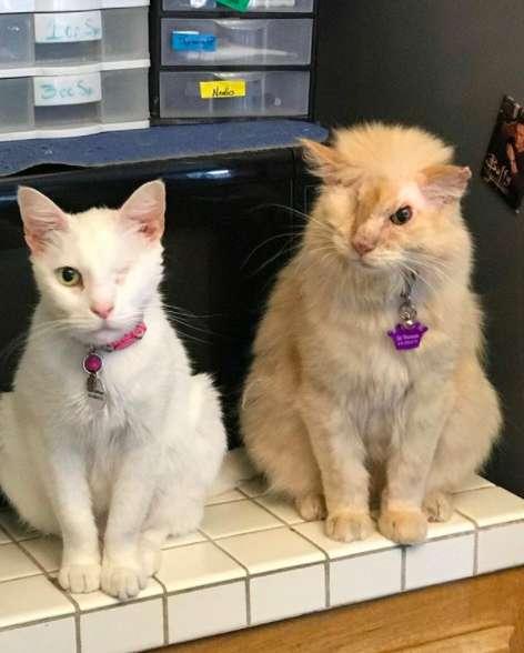два кота сидят рядом