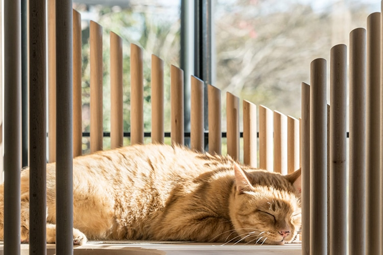 Домик для котов за полмиллиона рублей от японского дизайнера
