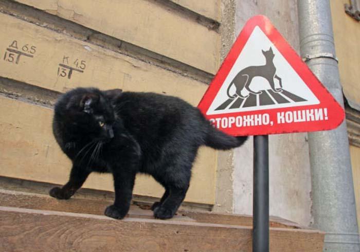 Музеи мира, в которых есть сотрудники-коты