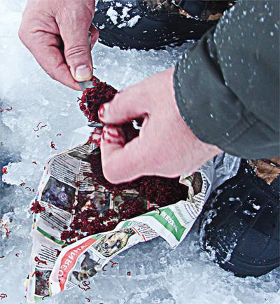 1562. Мысли о прикормке, рыбалка зимой.