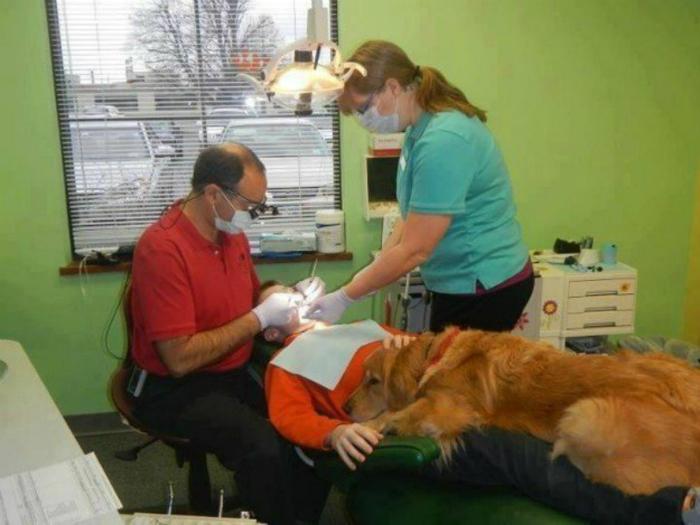 Этот пес успокаивает самых нервных пациентов.