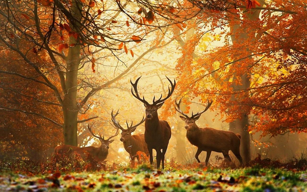 Картинки по запросу осенние пейзажи