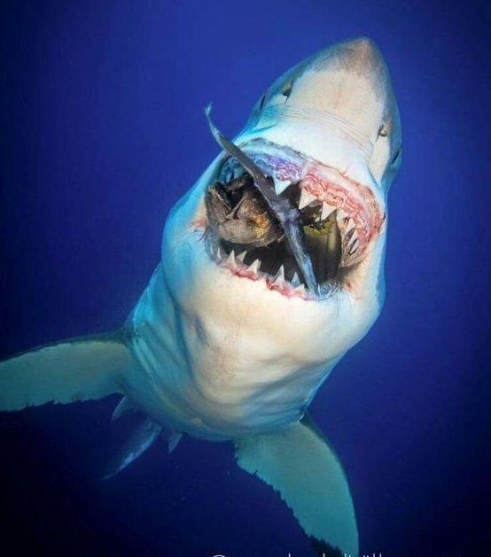 И конечно море-океан-озера-речки и их зубки животные, звери, зубы, интересное, красота, оскал, природа