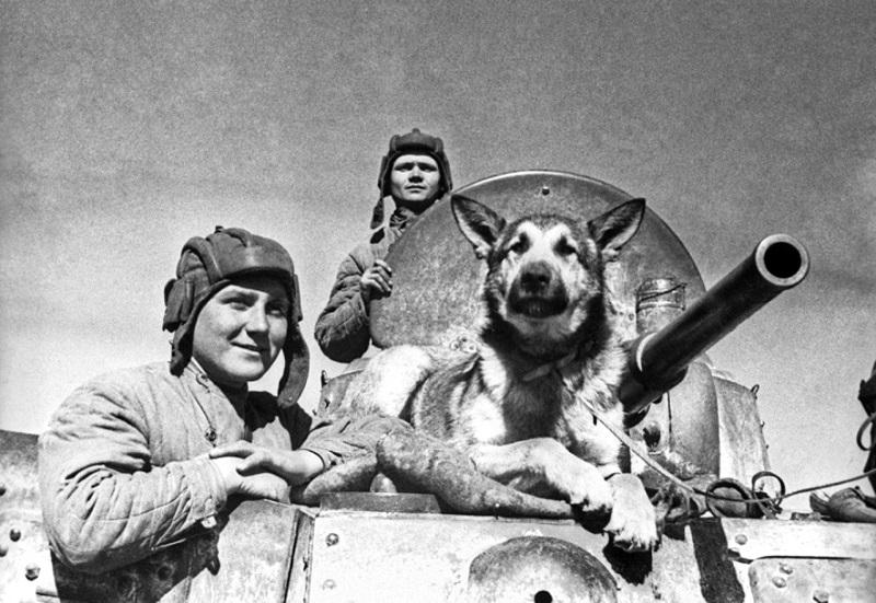 Знаменитый пёс-сапёр Джульбарс