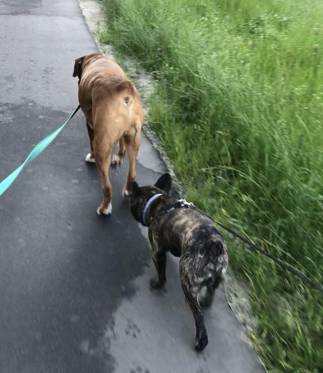 Собаки общаются запахами. Обнюхать друг друга это как прочитать о человеке в интернете или в соцсети. Запах говорит обо всем!