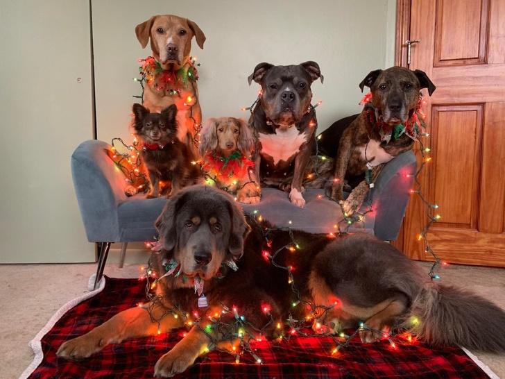 20+ животных, которые заставят вас прочувствовать атмосферу Нового года уже сейчас