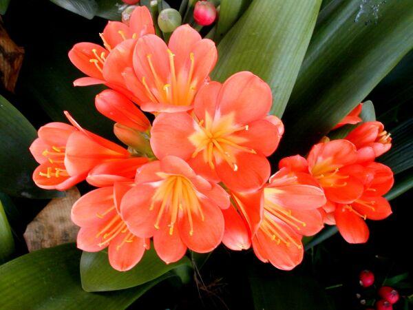 Красивые и ядовитые комнатные растения
