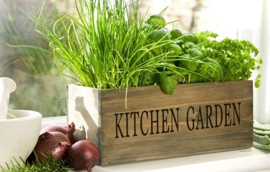 Зелень на подоконнике: будет ли расти, если ее пересадить с грядки? Как выращивать в домашних условиях петрушку, кинзу, шпинат и укроп